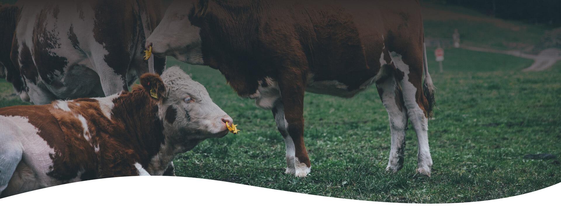 probiotic for animals